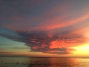 PangaeaProject Sunset Santa Cruz V Shape