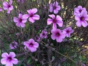 Flowers Violet Fluorescent